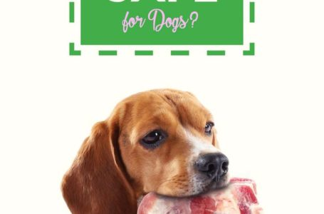 Feeding a Dog Dry Dog Food – You Need to Know the Danger of Fillers