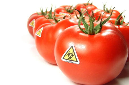 Genetically Modified Foods – An Asset to the World