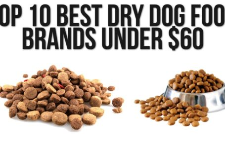 Dog Food Brands – Choosing the Right Food For Your Pet