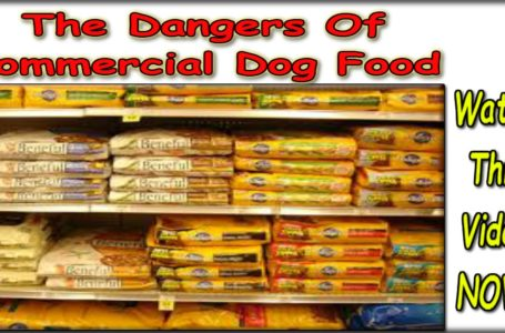 The Truth Behind Commercial Dog Food
