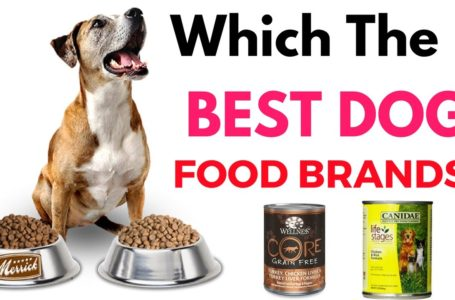 Healthy Pet Food – The Best Way to Choose From All