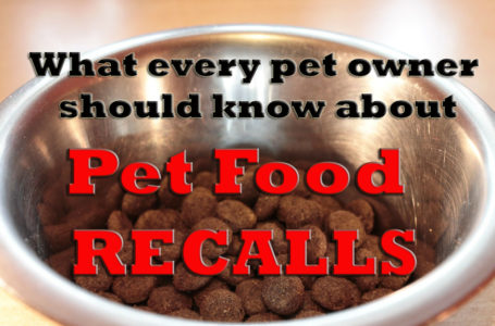 Commercial Dog Food – Ten Realities You Must Know