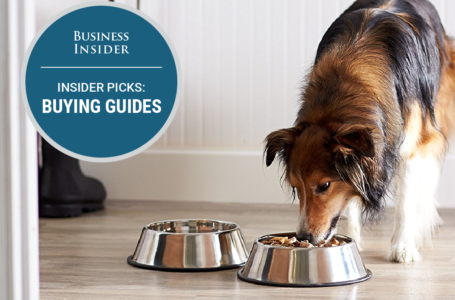 Is Holistic Pet Food Just Marketing Hype?